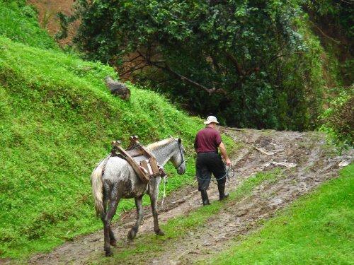 Utilización del caballo en el medio rural tradicional