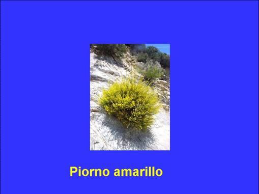 slide0001_image002