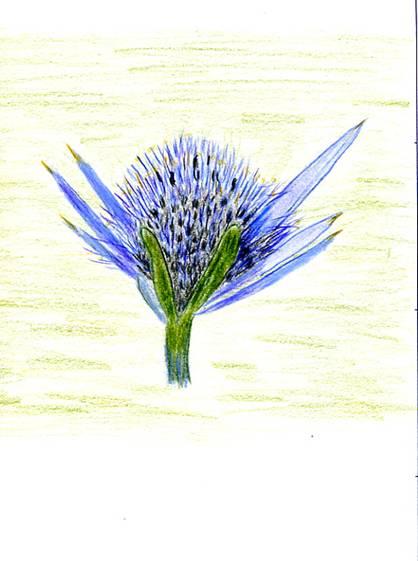 Resultado de imagen de floracantabrica.com